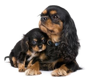 Анализ крови на релаксин у собак thumbnail